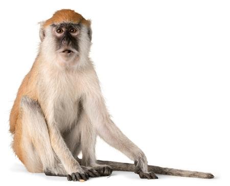 of isolated: Monkey.