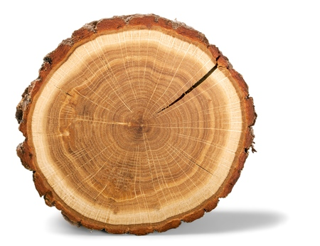 wood: Tree Ring.