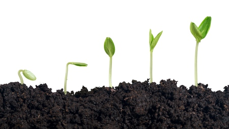 germination: Plant.