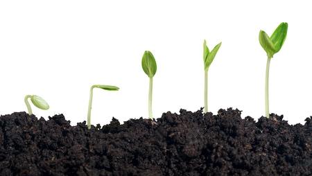 crecimiento planta: Planta.
