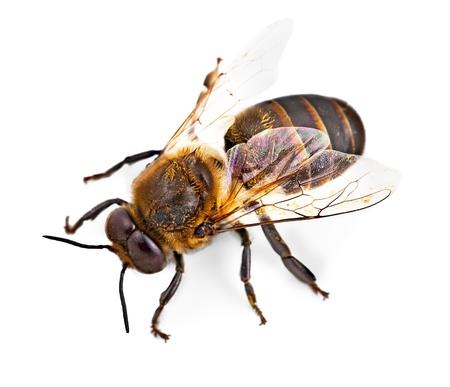 蜂。 写真素材