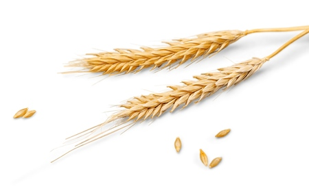 cereal: Trigo.  Foto de archivo