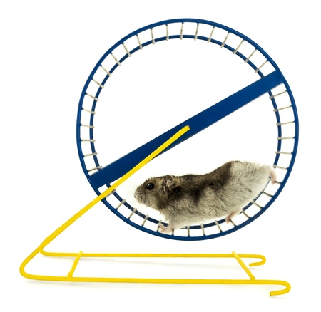 wheel: Hamster. Stock Photo
