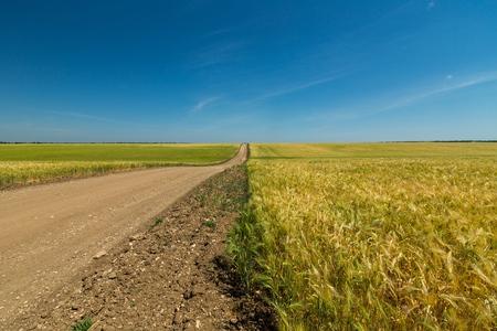 carretera: Camino de tierra.