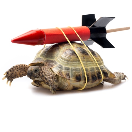rockets: Turtle. Stock Photo