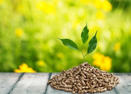 holzbriketts: Biomasse.
