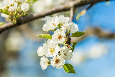Sun flower: Flower.