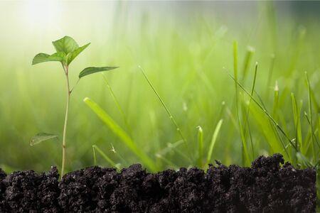 origins: Seedling. Stock Photo