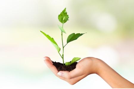 life growth: Human Hand.