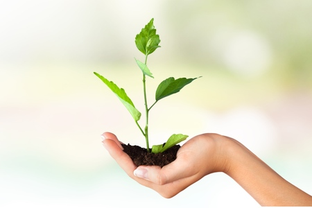 plant growth: Human Hand.