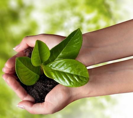 Environment. Фото со стока