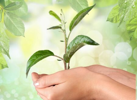 crecimiento planta: Mano humana que sostiene una planta