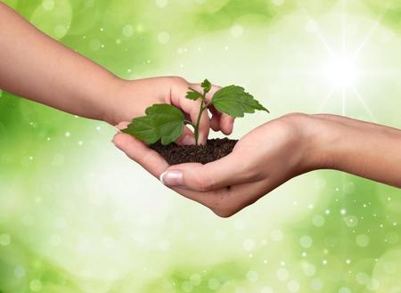 crecimiento planta: Mano humana. Foto de archivo