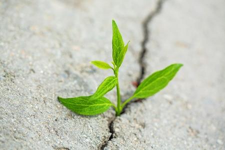 hope: Hope.