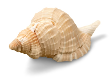 invertebrate: Shell.