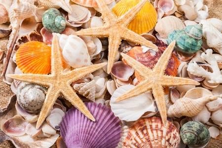 étoile de mer: Shell.