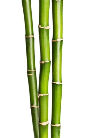 bambou: Pousses de bambou.