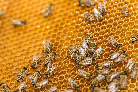 praiseworthy: Bee.