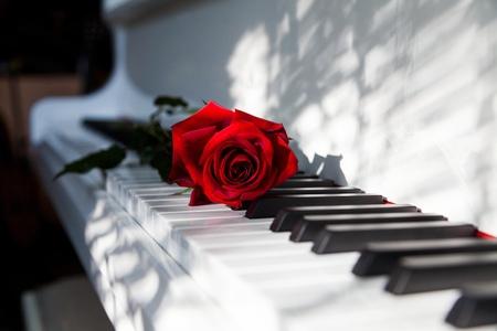 serenading: Wedding.