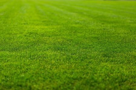 cancha de futbol: Campo de Fútbol.