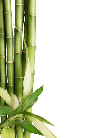 Bamboe-scheut. Stockfoto