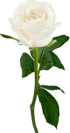 flower arrangement: Rose.
