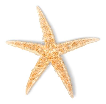 sand dollar: Shell.
