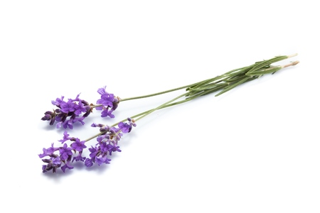 Lavender. Stock Photo - 48880540