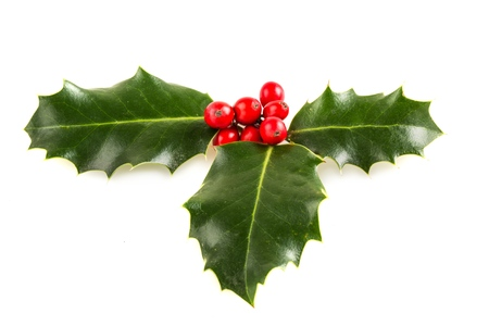 christmas decorations with white background: Holly.