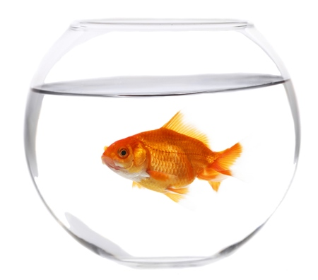 single animal: Fishbowl.