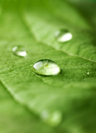 water on leaf: Earth.