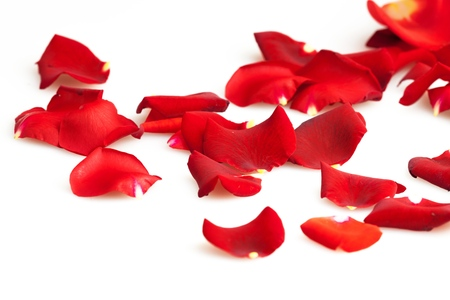 flower petal: Rose.