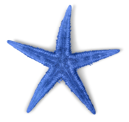 star: Star. Stock Photo