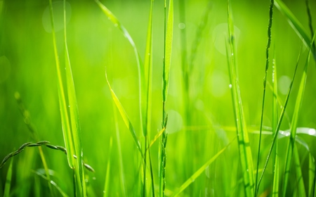 front  or back  yard: Grass.