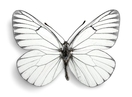 animal scale: Butterfly. Stock Photo