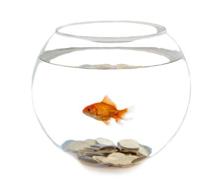 fishbowl: Fishbowl.