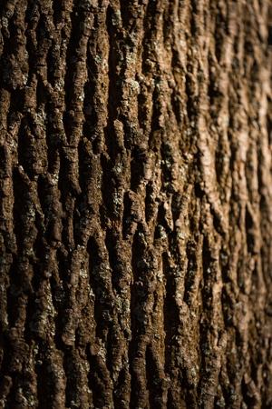 pine forest: Bark.