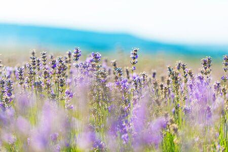 fields of flowers: Flower.