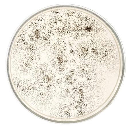 fungi: Fungi. Stock Photo