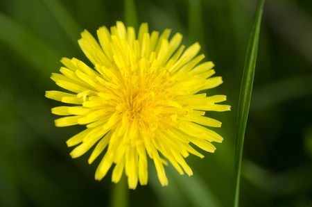 uncultivated: Flower.