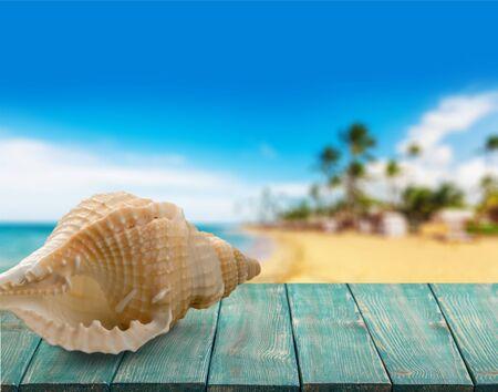 single animal: Shell.