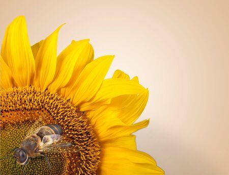 bee: Bee.