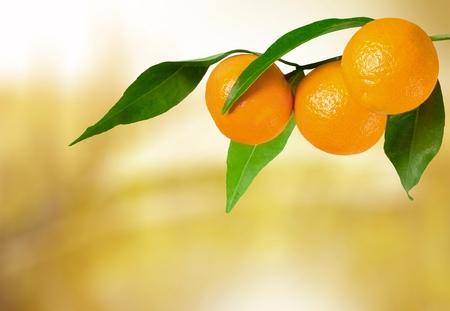 citrus tree: Orange Tree.