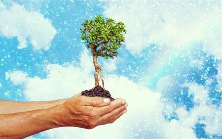 ozone layer: Environmental.