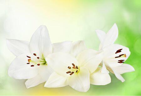 flor de lis: Lirio.