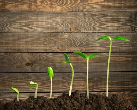 Crescita.