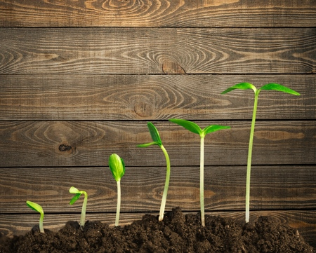Wachstum.