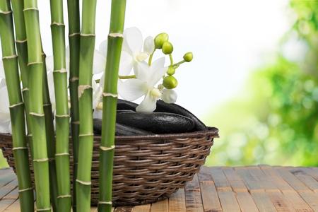 lastone: Bamboo.