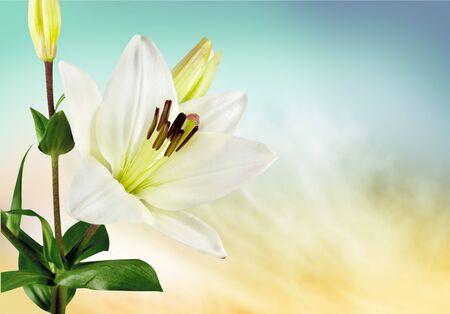 flower arrangement: Lily.