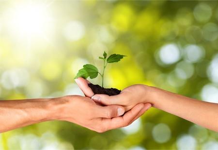 crecimiento planta: Semillas.